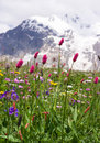 Wild mountain flowers Royalty Free Stock Images