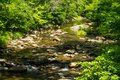 Wild Trout Stream in the Mountains of Virginia, USA Royalty Free Stock Photo