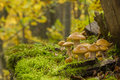 Wild mushroom growing in green mosses Stock Image