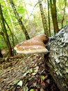 Wild mushroom on a tree photo of in forest at germany Stock Photos