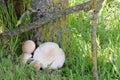 Wild mushrooms in autumn ii tree Stock Images