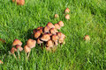 Wild mushrooms, fungi. Stock Photo