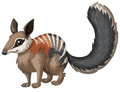 Wild numbat with happy face