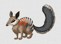 Wild numbat on transparent background