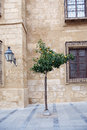 Wild orange tree on the street in old mediterranean town cordoba spain Stock Images