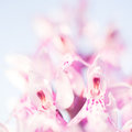 Wild orchid dactylorhiza close up Stock Images