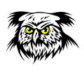 Wild owl Stock Photo
