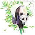 Panda hand draw watercolor illustration.