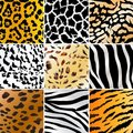 Wild patterns Royalty Free Stock Photography