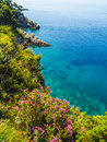 Wild plants above clear blue water tall cliffs with landscape around dubrovnik croatia Stock Images
