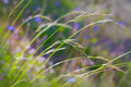 Wild plants in a meadow beautiful grass close up Royalty Free Stock Photo