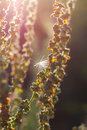 Wild plants in a meadow close up against sunset Stock Images