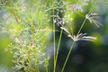 Wild plants in a meadow floral backgrounds Royalty Free Stock Image