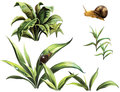 Wild plants snails isolated realistic illustration white background Royalty Free Stock Photos