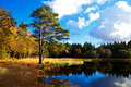 Wild pond in forest Royalty Free Stock Photo