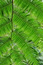 Wild pteridophyte a photo of Stock Images