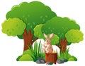 Wild rabbit in the forest