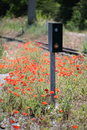 Wild red poppies blooming near railroad tracks bright in full bloom a track and train switch box Royalty Free Stock Image