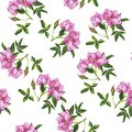 Wild rose bouquet pattern. Hand drawn watercolor.