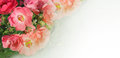 Wild rose, dog roses - Border, frame, garland - Panorama greeting card, gift card - Background , text, body, copy space Royalty Free Stock Photo