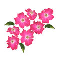 Wild rose pink flowers of imitation of watercolor Royalty Free Stock Image
