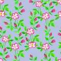 Wild roses watercolor seamless pattern. Flowers, leaves. Floral background. Fabric design, wallpaper