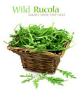 Wild rucola Royalty Free Stock Photography