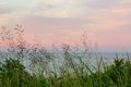 Wild sea grass colorful sunset sky ocean Royalty Free Stock Photo
