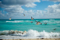 Wild seagulls flying over beach sear miami beach florida Royalty Free Stock Photo