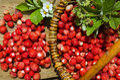 Wild strawberies basket Royalty Free Stock Photo