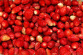 Wild strawberries Royalty Free Stock Photos