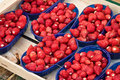 Wild strawberries Royalty Free Stock Photo