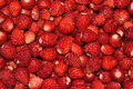 Wild strawberries background as texture Stock Photography