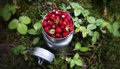 Wild strawberries in a mug in forest background Royalty Free Stock Photo