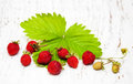 Wild strawberries on a old white wooden background Stock Photos