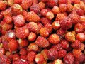 Wild strawberry berries fruit dessert background texture food Royalty Free Stock Photo