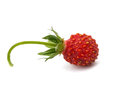 Wild strawberry isolated on white background Royalty Free Stock Image