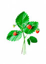 Wild strawberry isolated on white Royalty Free Stock Photo