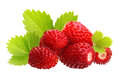 Wild strawberry macro Royalty Free Stock Photo