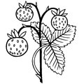 Wild strawberry silhouette isolated on white background Royalty Free Stock Photo