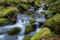 Wild stream in old woodland,time lapse water motion Royalty Free Stock Photo
