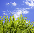 Wild Tall Grass Stock Image