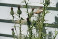 Wild thistle pods after bloom a nice view of before and Stock Photos