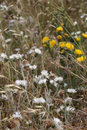 Title: Wild thorny plants and flowers