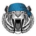 Wild tiger Wild animal wearing bandana or kerchief or bandanna Image for Pirate Seaman Sailor Biker Motorcycle