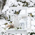 Wild titmouse bird in the Outdoor winter and Christmas still life composition Royalty Free Stock Photo