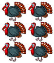 Wild turkey with different emotions