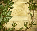 Wild vine branch on wooden background Royalty Free Stock Images