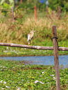 Wild white large ciconiiformes bird standing Royalty Free Stock Photo