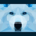 Wild wolf stares forward. Nature and animals life theme background. Abstract geometric polygonal triangle illustration Royalty Free Stock Photo